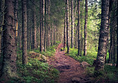 Idyllic landscape with path and primeval forest at summer morning in Koli, Finland