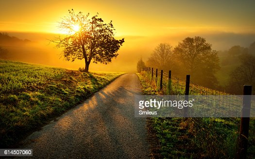 Idyllic rural landscape in golden light : Stock Photo
