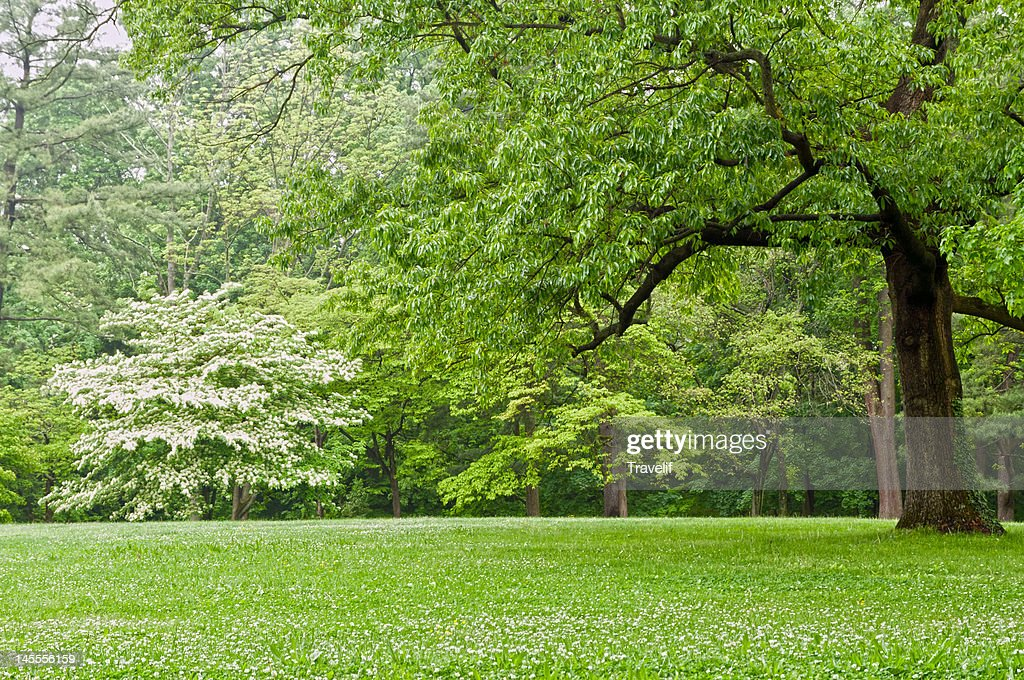 Idyllic spring landscape in the park : Stock Photo