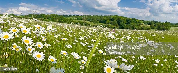 Idyllic summer meadow panorama