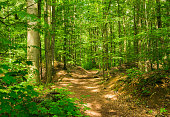 Track in forest with green lush foliage on trees