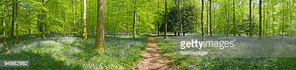 Idílico caminho de Floresta de Verão
