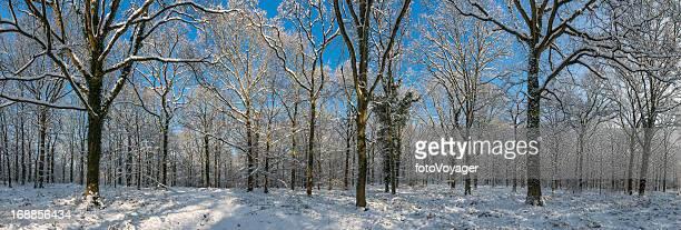 Idyllic winter woodland white snowy forest panorama