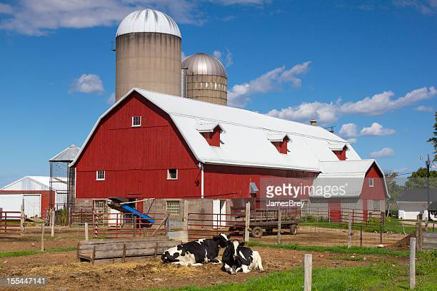 Idyllic Wisconsin Farm, Red Barn, Happy Cows