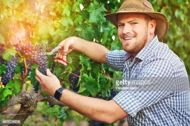If you enjoyed wine today, thank a farmer!