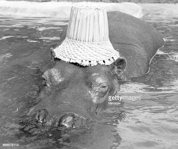 If you want to get ahead get a hippo Humphrey the hippo is known as a bad tempered beast He chased his keeper and a photographer out of his den at...