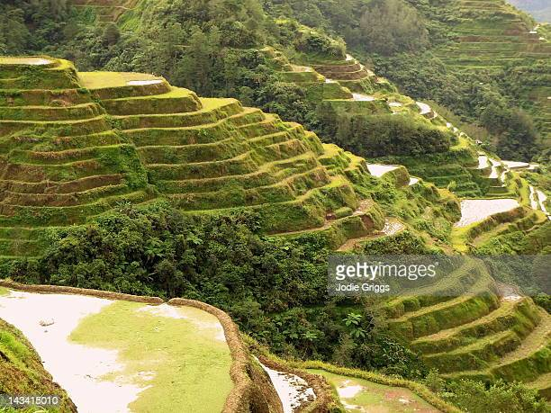 Ifugao rice terraces