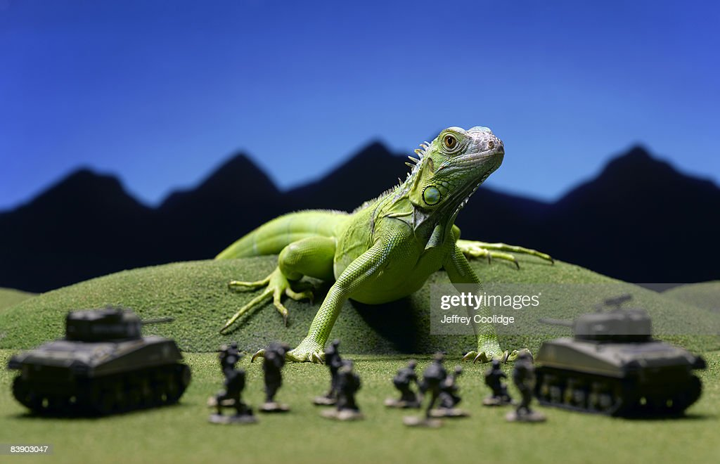 Iguana confronting toy soldiers : Stock Photo