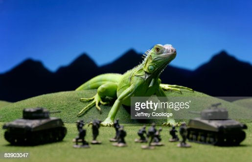 Iguana confronting toy soldiers : Foto de stock