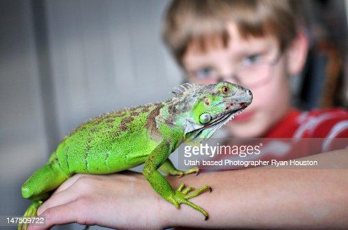 Iguana on young boy arm : Stock Photo