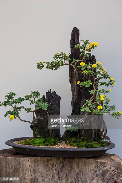 Ikebana meaning 'arranged flower' is the Japanese art of flower arrangement also known as kado the 'way of flowers' More than simply putting flowers...