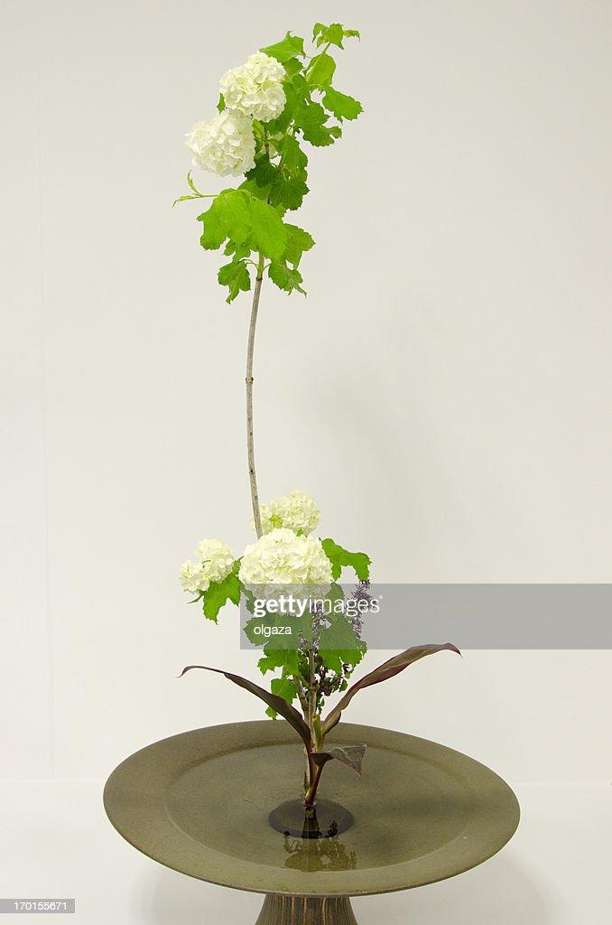 Ikebana : Stock Photo