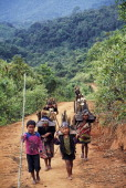 Iko or Akha children carrry firewood up the hillside near the village of Baan Mai a day's walk from Muang Sing in Northern Laos The Iko are...