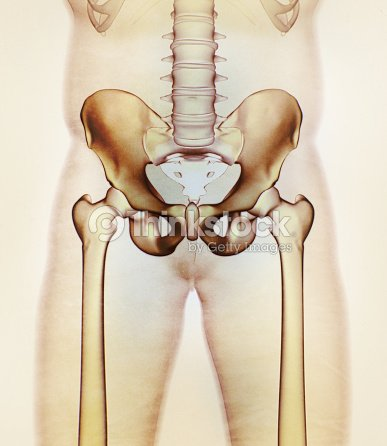 Hueso Ilion Pelvis De Hueso De La Cadera Anatomía Humana Radiografía ...