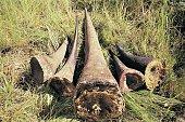 Illegal haul of Rhino horn