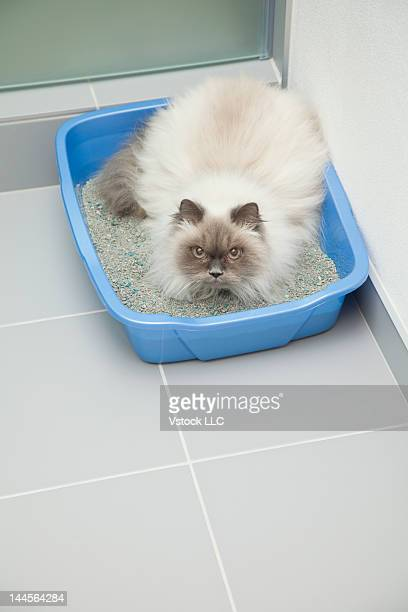 USA, Illinois, Metamora, Cat at litter box