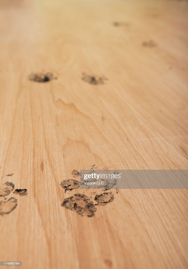 USA, Illinois, Metamora, Close-up of floor with dog's footprints