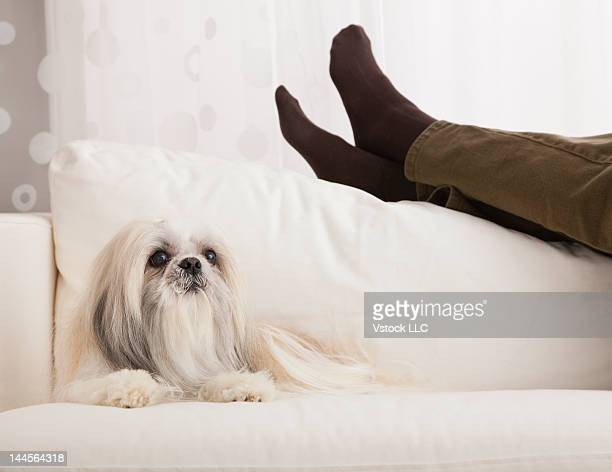 USA, Illinois, Metamora, Legs of woman relaxing on sofa with dog