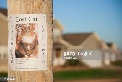 USA, Illinois, Metamora, Lost cat poster on telephone pole