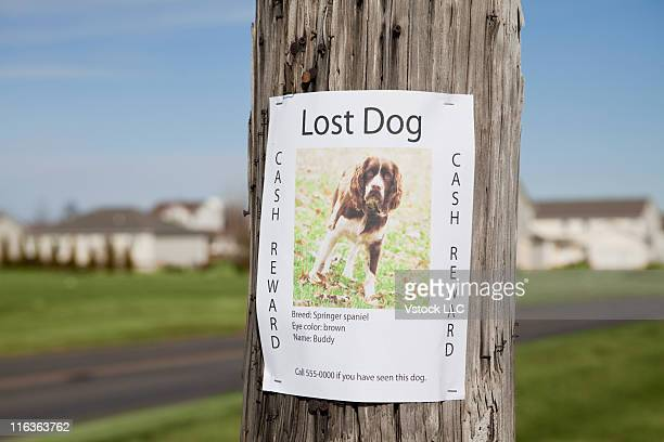 USA, Illinois, Metamora, Lost dog post