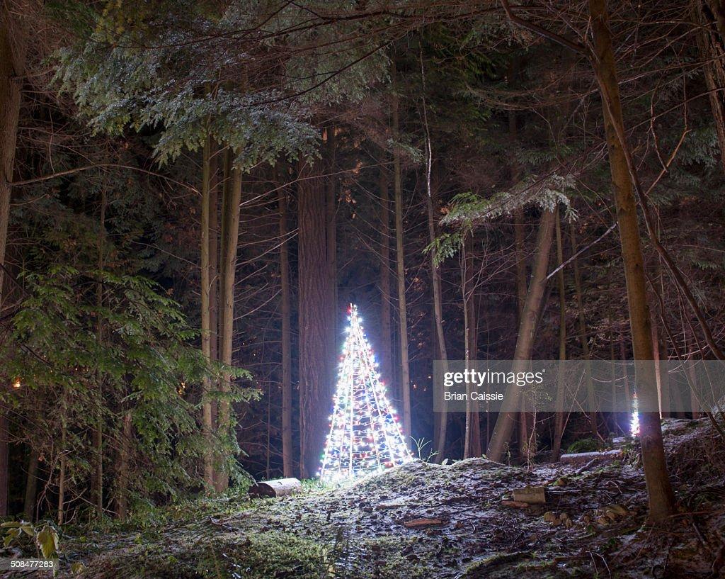 Illuminated Christmas tree in park