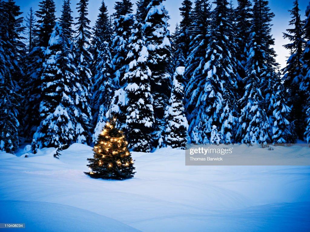 illuminated christmas tree on the snow at night stock. Black Bedroom Furniture Sets. Home Design Ideas