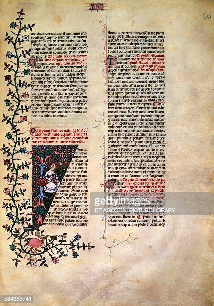 Illuminated page from the Naturalis Historia by Pliny the Elder Latin manuscript Copyright Veneranda Biblioteca Ambrosiana Milan Biblioteca Ambrosiana