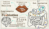 Illustration about Probiotics and the Digestive System on old Paper