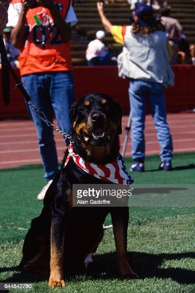 Chien Stock Photos and Pictures | Getty Images