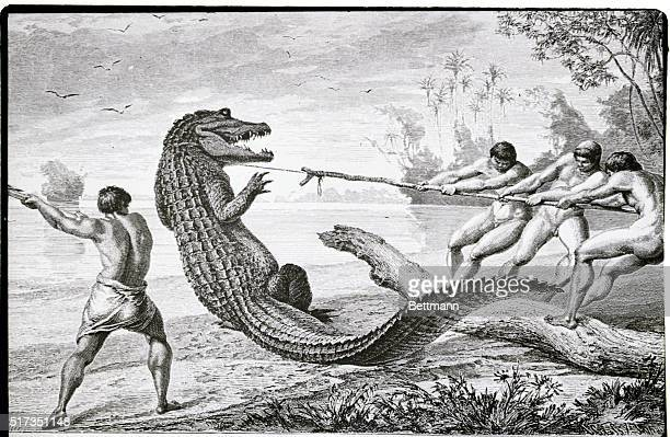 Illustration depicting men catching an alligator with a lasso Lithograph 1875 BPA2