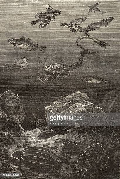 Illustration for the novel 'Twenty Thousand Leagues Under the Sea' by Jules Verne Fauna Engraving