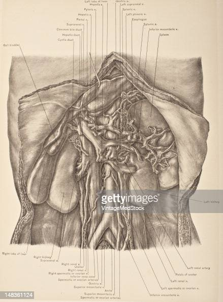 Illustration from 'Surgical Anatomy The Treatise of the Human Anatomy and Its Applications to the Practice of Medicine and Surgery volume III' shows...