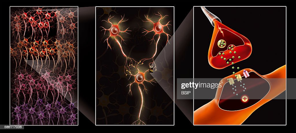 Illustration from the neural network to the synapse 3 neurons and the connection between these neurons synapse with the transmission of an action...