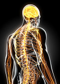 3D illustration male nervous system, medical concept.