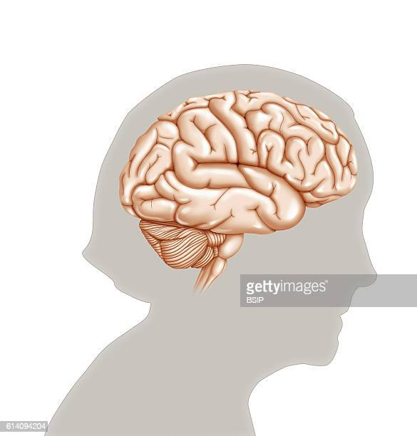 Illustration of a brain in profile in the outline of an older woman