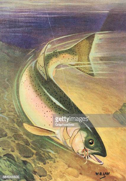 Illustration of a diving Kamloops rainbow trout on the line of a fisherman 1950 Lithograph