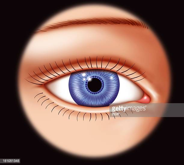 Illustration Of A Frontal View Of A Woman's Eye With Blue Iris Pupil And Eyelids