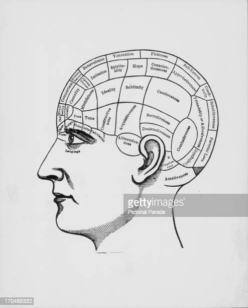Illustration of a human cranium depicting the sections of the brain responsible for different functions of thought including timehope and imitation