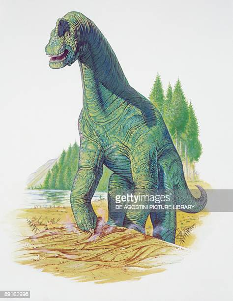 Illustration of Brachiosaurus