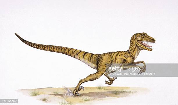 Illustration of Deinonychus