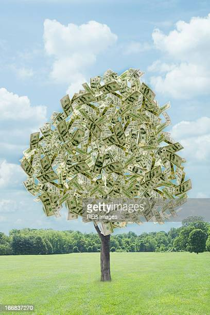 Illustration of dollar bills growing on tree