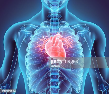 3D illustration of Heart, medical concept. : Stock Photo