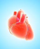 3D illustration of Heart - Part of Human Organic.