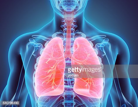 3D illustration of Lungs, medical concept. : Stock Photo