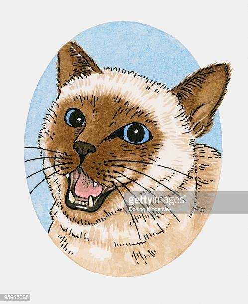 Illustration of Siamese cat miaowing