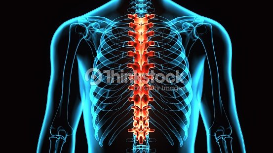 3d Illustration Of Spinal Cord A Part Of Human Skeleton Anatomy ...
