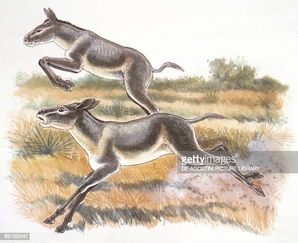 http://media.gettyimages.com/photos/illustration-of-two-thoatherium-galloping-picture-id89165041?s=612x612