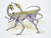 Illustration representing two Compsognathus longipes