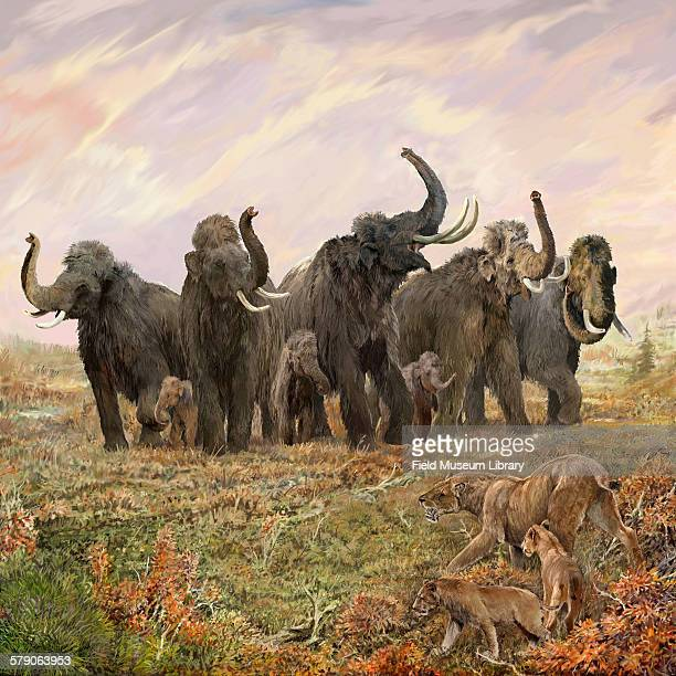 Illustration showing a circle of mammoths and mastodons by Velizar Simeonovski For the Mammoths and Mastodons Titans of the Ice Age exhibit at the...