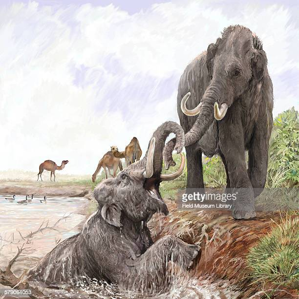 Illustration showing Columbian mammoths at a sinkhole by Velizar Simeonovski For the Mammoths and Mastodons Titans of the Ice Age exhibit at the...